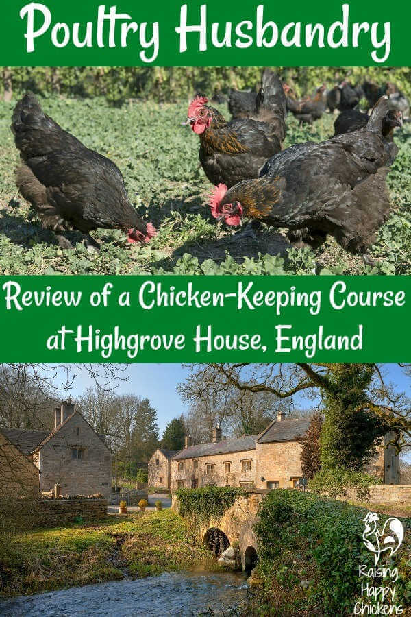 Pin for later - chicken husbandry course at Highgrove House, England - review.