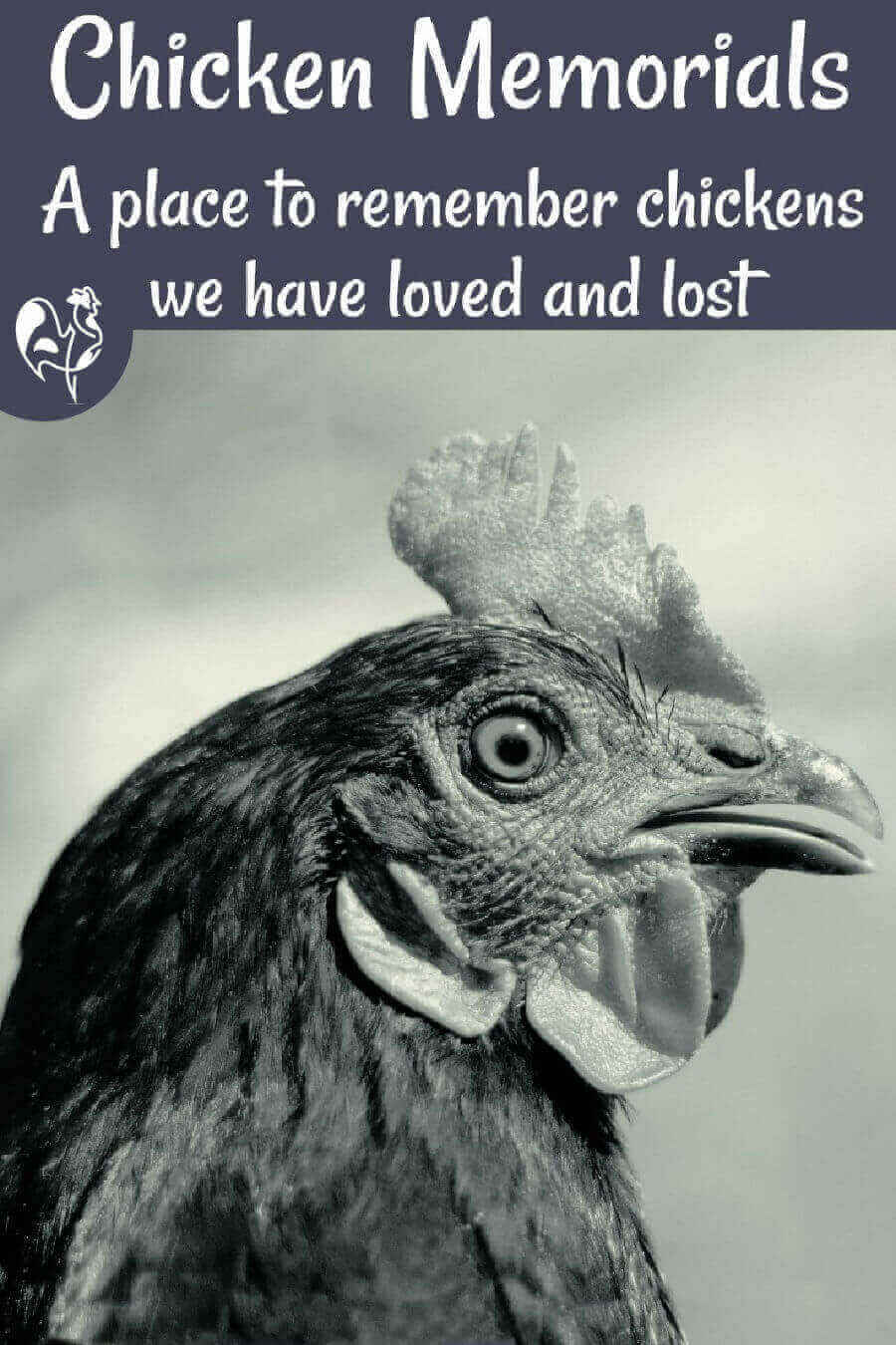 Losing a pet chicken can be a heart-wrenching experience. This is a place to leave your tribute to a much-loved hen or rooster. #raisinghappychickens #backardchickens #homesteading #chickendeath