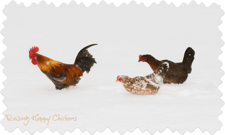Three chickens in snow.