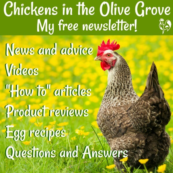 Backyard chicken news, information and tips about care, coops and hatching. Join my newsletter and get a free giveaway e-book. #backyardchickens #chickencare #backyardchickenlove