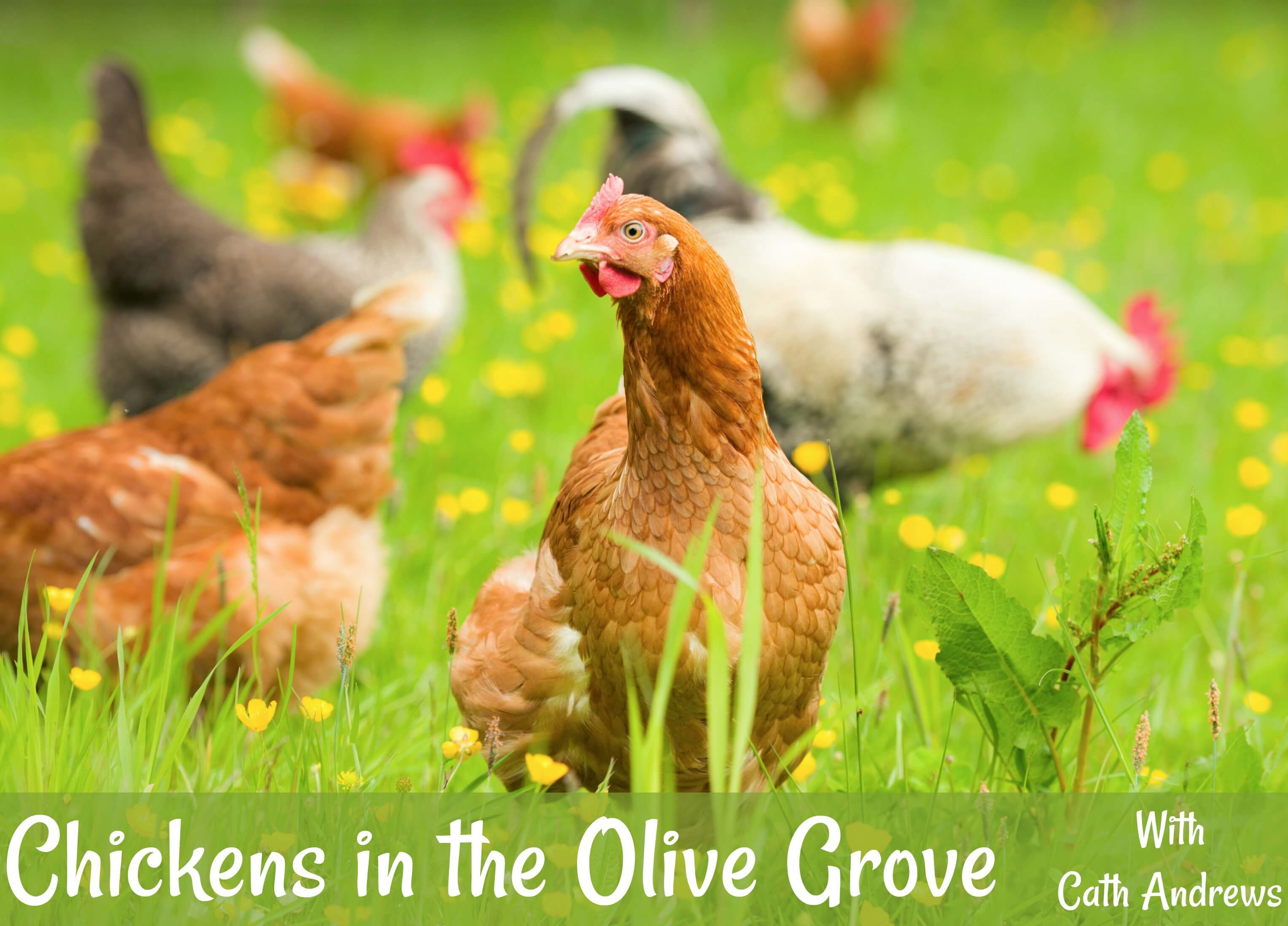 'Chickens in the Olive Grove' - my newsletter header.