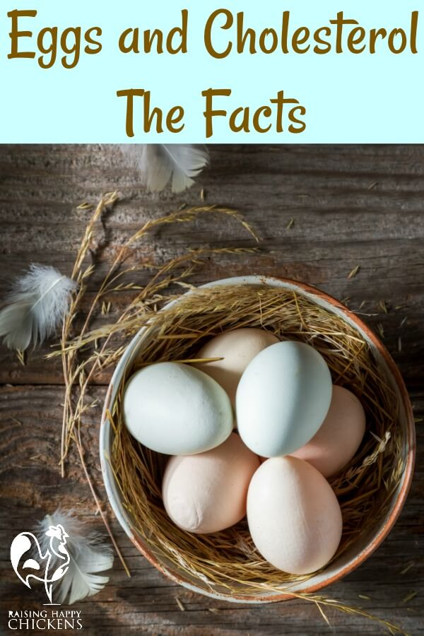 #backyardchickens #eggs #cholesterolineggs #pasturedeggs  Cholesterol in eggs: is it really as bad as you might have been led to believe?