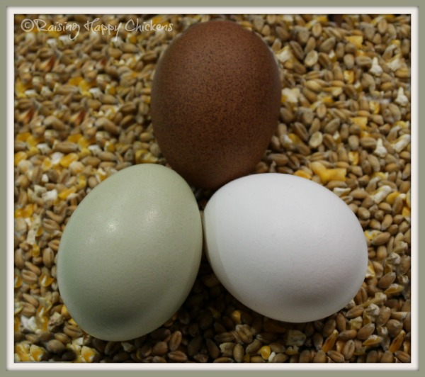 Three healthy, nutritious, home laid eggs