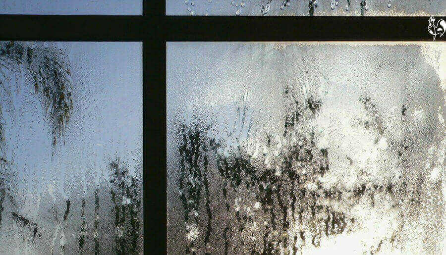 Condensation on window.