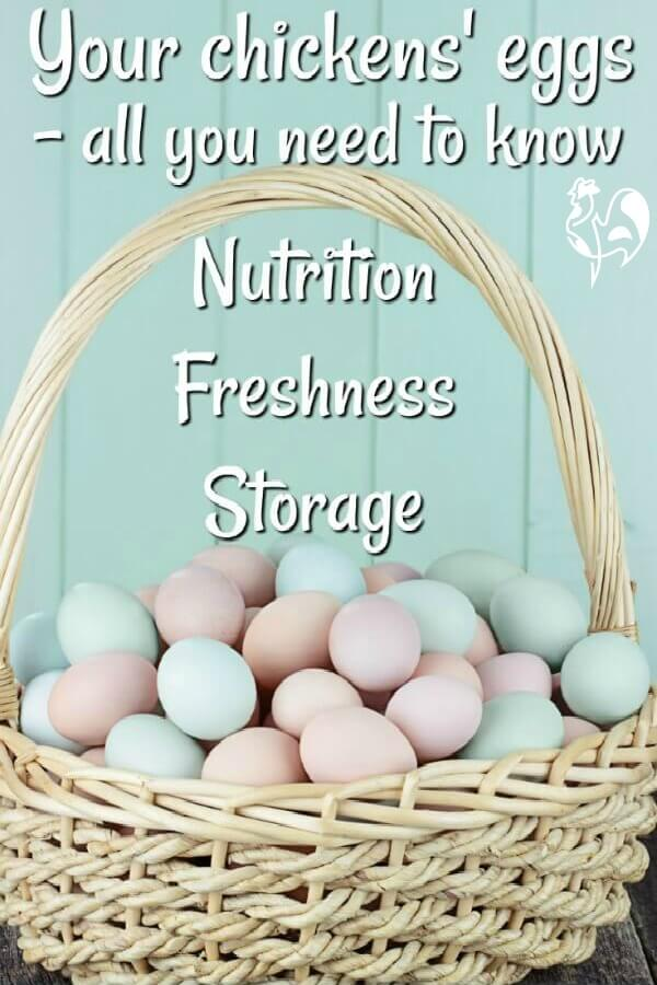 Your chickens' eggs: all you ever wanted to know about their nutritional value, the good news about cholesterol, and how to store eggs so they keep fresh for the longest time.  Enjoy!