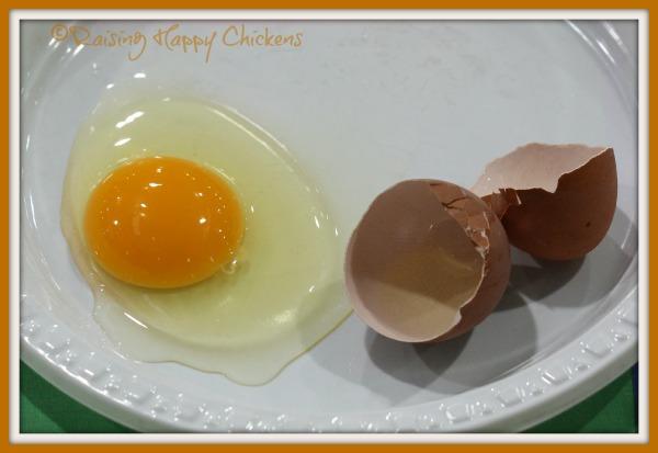 A beautiful fresh home-laid egg.