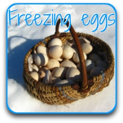 Basket of eggs on snow
