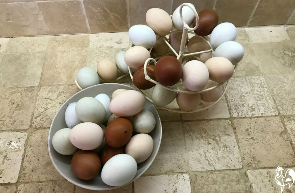 Eggs are one of the many benefits of having chickens. Come join me for all the information you need about raising happy, healthy chickens in your own backyard!