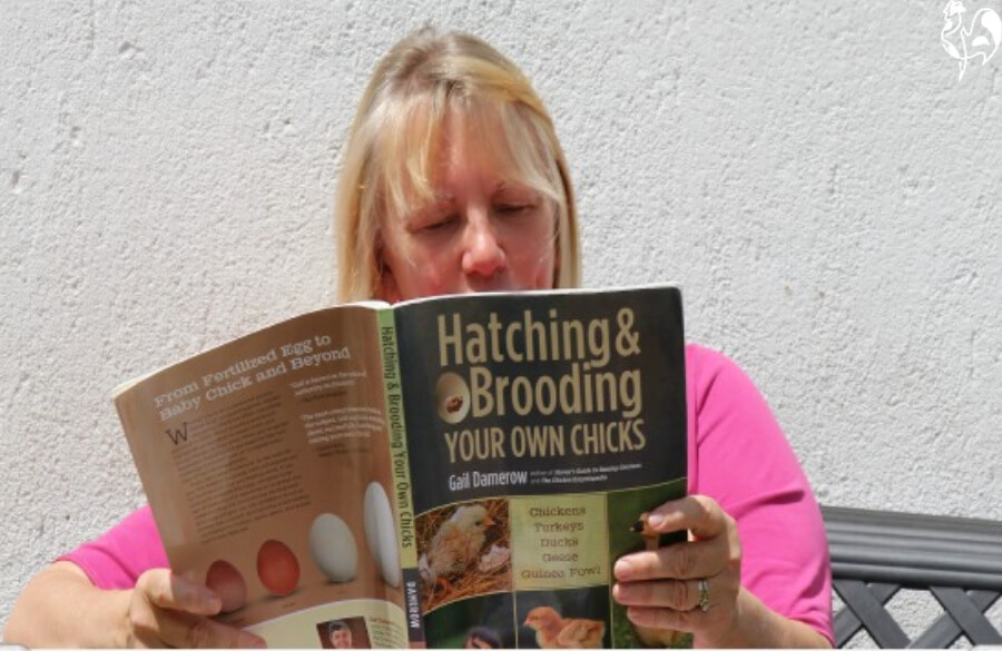 Me, reading Gail Damerow's hatching guide.