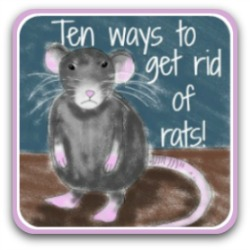 Click here to see ten ways of getting rid of rats.