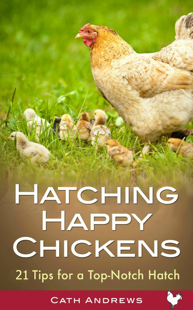 Hatching happy chickens book