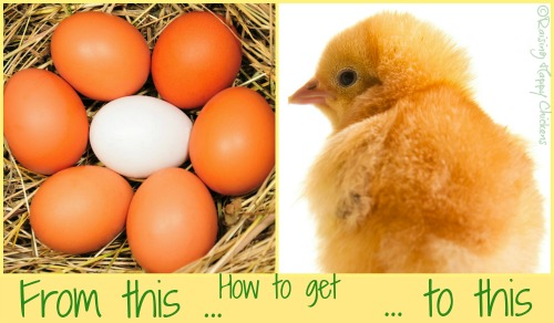 The hatching process from start to finish.