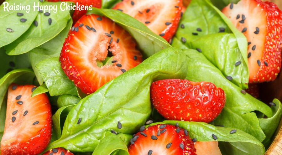 Strawberries, spinach leaves and sesame seeds - a healthy chicken treat for summer.
