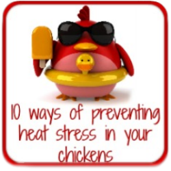 Clickable link to how to prevent heat exhaustion in chickens