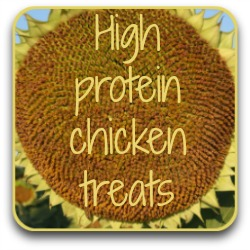 Click to see a list of high protein foods to keep your chickens healthy in winter.