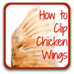 How to clip chicken wings - link.