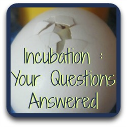 Got questions about incubation? Follow this link!