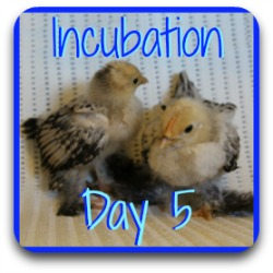Want to review day 5 of incubation? Use this link.