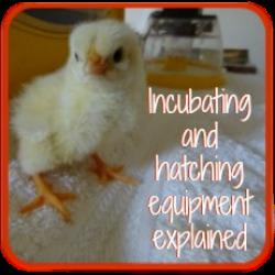 Incubating equipment: I assess the best.
