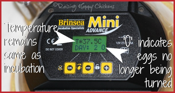 The Brinsea Mini Advance stops turning the eggs automatically.
