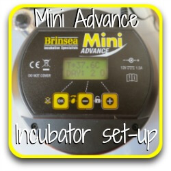 Brinsea Mini Advance incubator - review. Link.