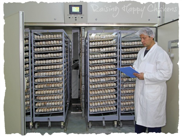 A commercial hatching incubator holding several thousand eggs.