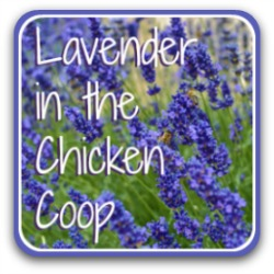 Lavender aromatherapy for chickens.