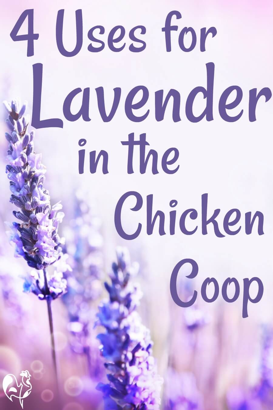 Lavender Aromatherapy For Chickens All You Need To Know