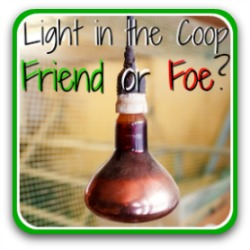 Light in the chicken coop - yes or no? - Link.