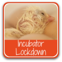 Link to incubator lockdown - what it means and how to do it.