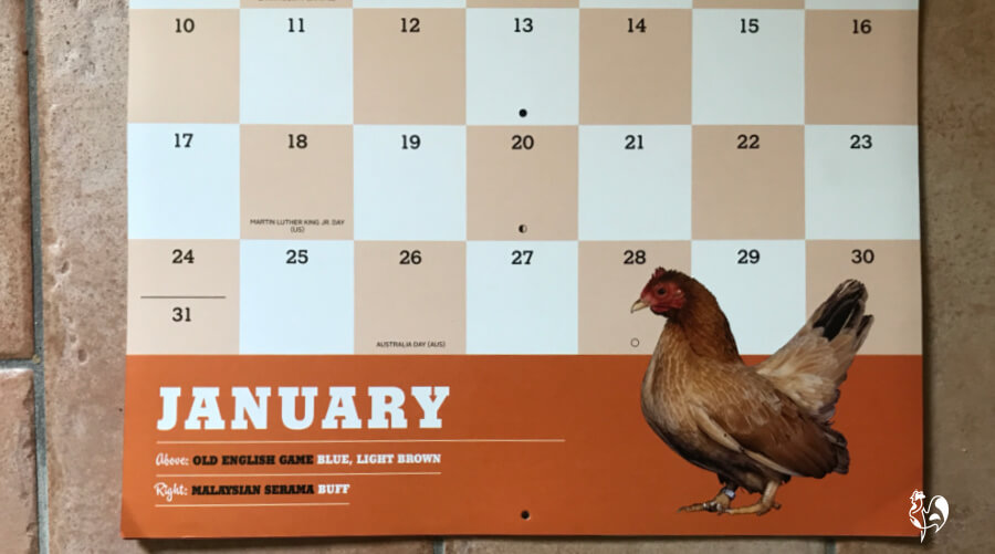 Month to a page chicken calendar