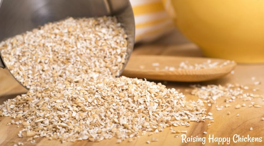 Oats - a good protein-rich food for chickens at times when they need help because of moulting or harsh winter conditions.