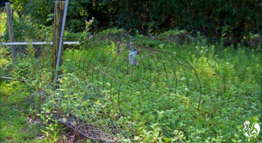An overgrown garden will attract rats and mice