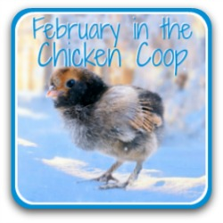 Taking care of your flock in February - 20 to-dos to keep your chickens healthy.