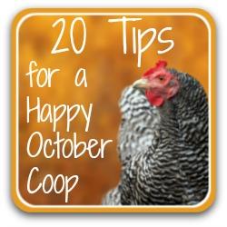 Chicken care in October - link.