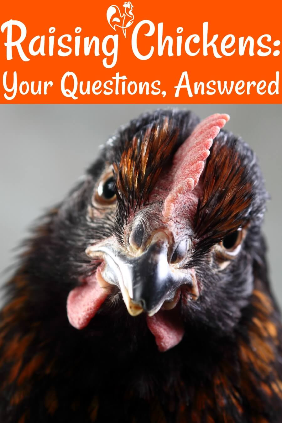 Raising chickens - questions and answers. Pin for later.