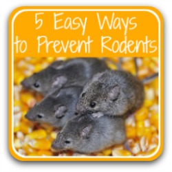 5 easy ways to prevent a rodent infestation - link.