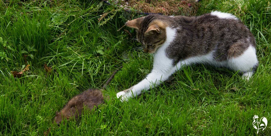 Cats are a good way of keeping the rat population down.