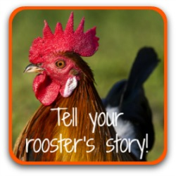 Tell the world about your rooster - click here!