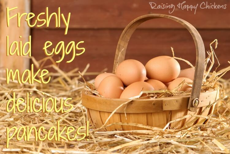 Collection of eggs in a basket
