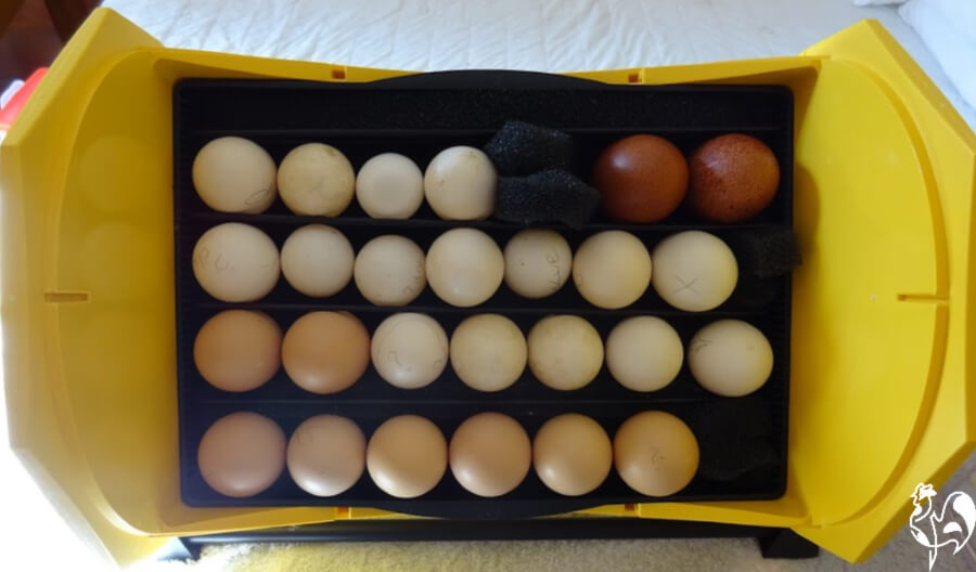 A mix of different chicken breed eggs set into my Octagon 20 incubator.