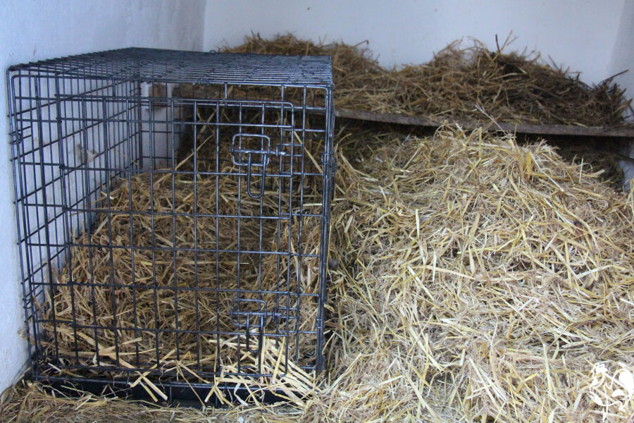 Dog crate in a chicken coop.