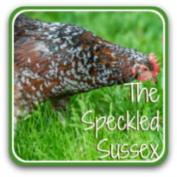 Speckled Sussex chickens link