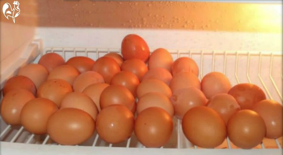 A pile of eggs on a shelf in the fridge.