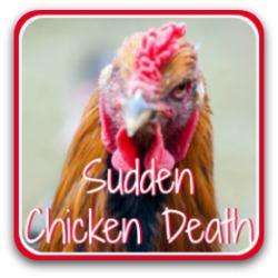 Sudden chicken death syndrome - link.