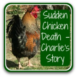 Link to a detailed guide to what sudden chicken death is and how to avoid it.