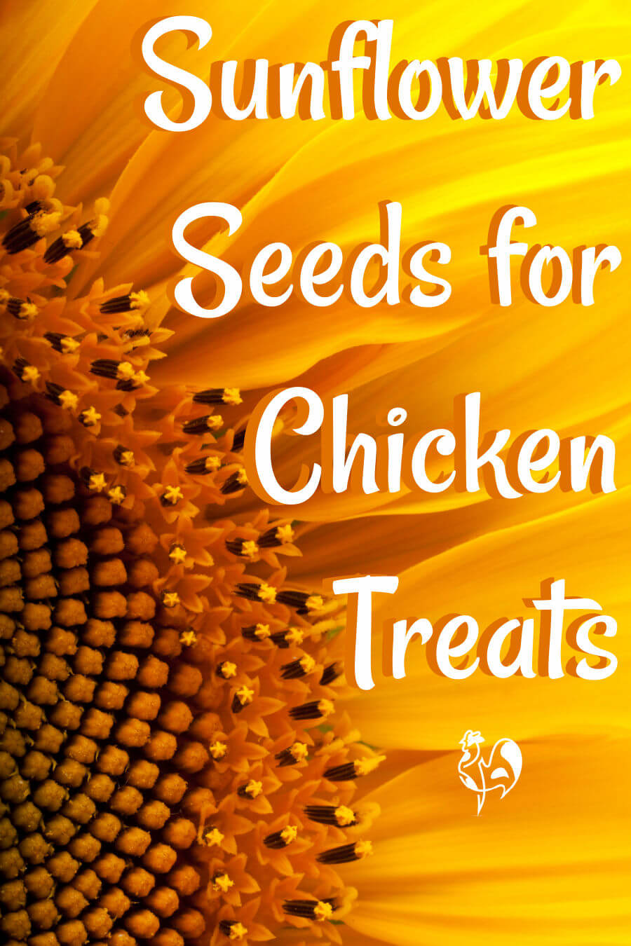 Sunflower seeds for chickens - Pin for later.