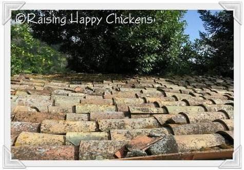 The chicken coop's terracotta roof
