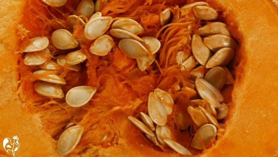 Pumpkin seeds - the benefits for chickens.