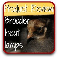 Brooder heat lamps - which is best? Product review link.